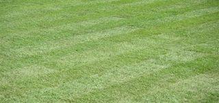Tielen willy - Bunsbeek - Maaien van tuinen en gazon